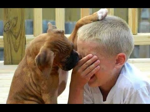Dogs and cats & owners are the best friends | Funny Cat and Dog compilation