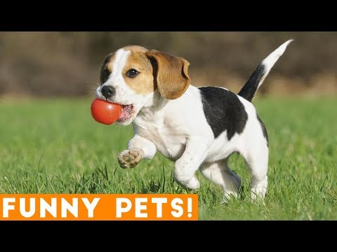 Funniest Dogs of the Week Compilation March 2018 | Funny Pet Videos
