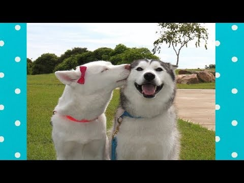 FUNNY DOGS PLAYING WITH BEST FRIEND | Top Dog Compilation