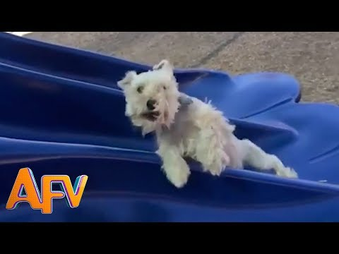 Dogs Who Fail At Being Dogs   Try Not To Laugh!   AFV Funniest Videos 2018