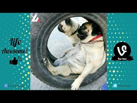 Try Not To Laugh Funny Dogs Compilation | Funny Pet Videos