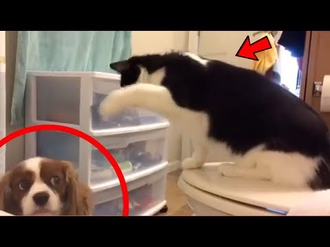 CATS vs DOGS Funny COMPILATION !