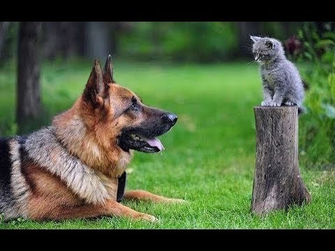 KITTENS Trying To Befriend DOGS – Cute Kitten And Funny Dog Videos Compilation 2018 [BEST OF]