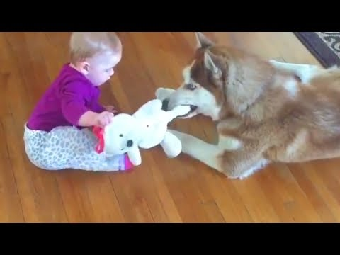 Baby 👶 and Dog 🐶 Funny Fails 🎉 Funny Baby Video
