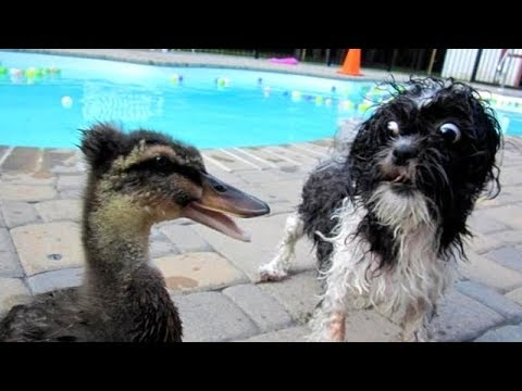 PREPARE YOURSELF to LAUGH ALL DAY LONG! – Best FUNNY DOG VIDEOS