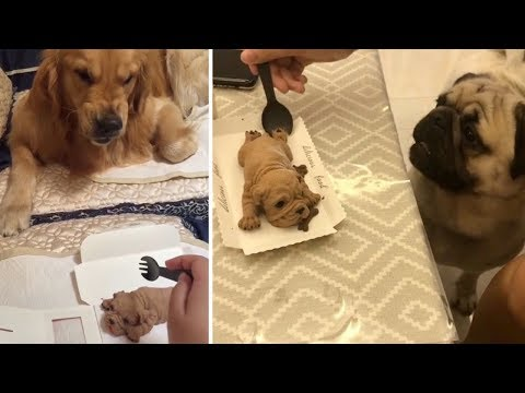 Funny Dog Reaction to Dog Cake | Funny Dog Cake Reaction Compilation