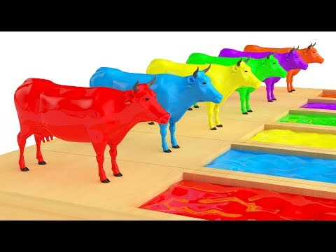 Cow Transporter Truck   Cow Race Water Slides   3D Nursery Rhymes   Songs For Children   LAC TV LIVE