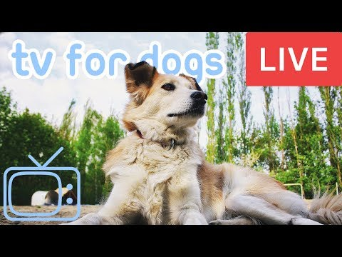 TV for Dogs! Chill Your Dog Out with this 24/7 TV and Music Playlist for New Years Eve!