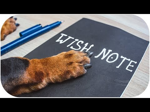Tricky Dog Wish List! Funny dachshund video!