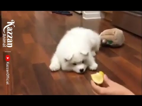 Funniest  #Dogs and Cats P2 #Awesome Funny Pet Animals' Life Videos 2019 – Kazzan Anima