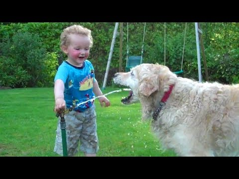 Laughing Babies Playing With Dog And Water 👶🌊🐶 Funny Baby And Dog Compilations