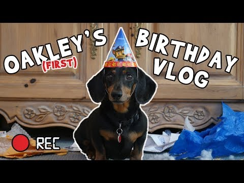 Ep 2: Oakley the Dachshund's BIRTHDAY VLOG – Funny Dog Video