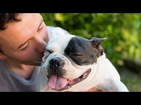 Funny Dogs want to more Cuddle and Kiss from their Owners 🐶🤭Cute Dog Videos Compilation