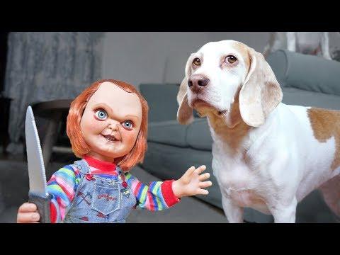 Dogs vs Lil' Big Chucky Prank: Funny Dogs Maymo, Penny & Potpie
