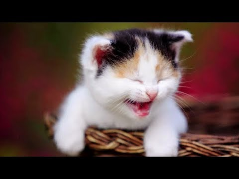 Cute Cats and Dogs 2019 ✪ Best Funny Pet Videos #16