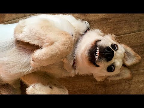 🤣 Funniest 🐶 Dogs and 😻 Cats – Awesome Funny Pet Animals Life Videos 😇