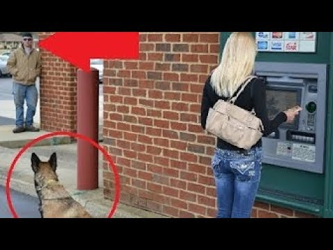 Dogs Protecting Their Owners – Dogs that are better than guns! [ Dog Training ]