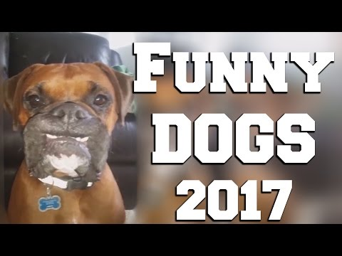 Funny Dog Videos 2017 | Dog Fails | Funny Dogs Compilation || FailGag