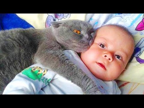 Best Funny Fails Baby and Cats – Funny Baby and Pet
