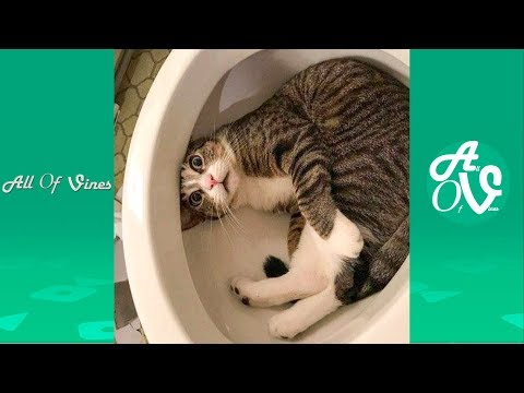 Try Not To Laugh Watching Funny Animals Compilation   Funniest Animals Vines 2019
