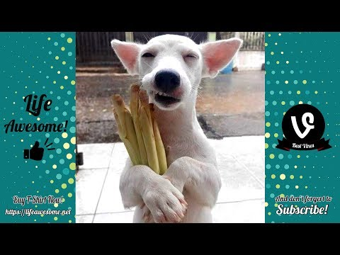 TRY NOT TO LAUGH – Funny Animals Compilation July 2019 – These Dogs Are So Weird