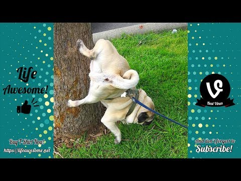 TRY NOT TO LAUGH – Funny Animals Compilation 2019 – Cats and Dogs Time 🤣🤣