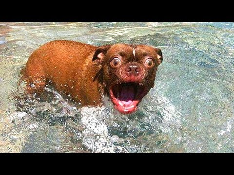🤣 Funniest  😻 Cats and 🐶 Dogs – Awesome Funny Pet Videos 😇