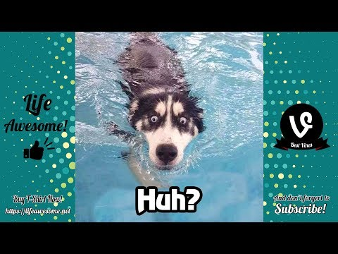 TRY NOT TO LAUGH – Funny Animals Video 2019 – Dogs are Dogs, not Cats