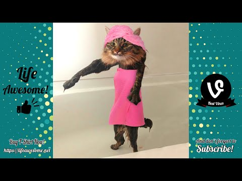TRY NOT TO LAUGH – Funny Cats Water Fails Video 2019 – Don't Bathe The Cats