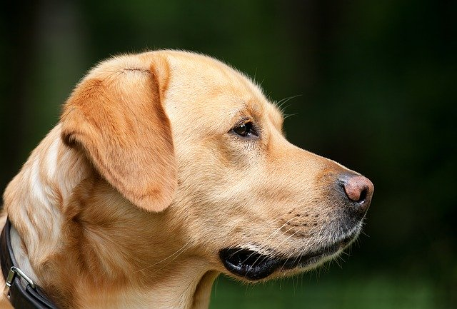 Tips To Have A Well-Behaved Dog