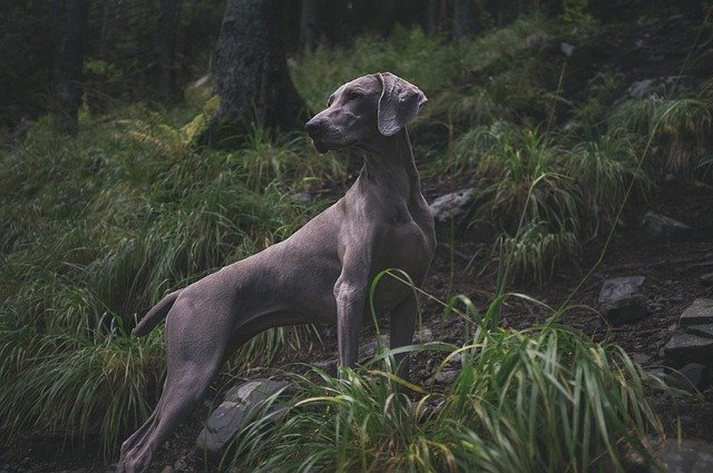 Turn Your Savage Beast Into A Well-Behaved Dog With These Simple Tips