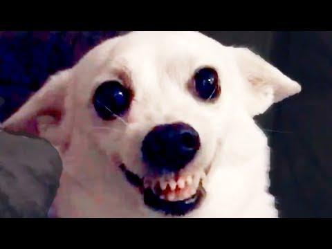 Funny DOG Videos! 🐶