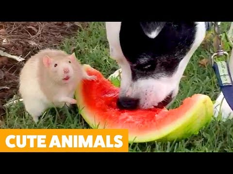 Try Not To Laugh – Cutest Funny Pet Videos!