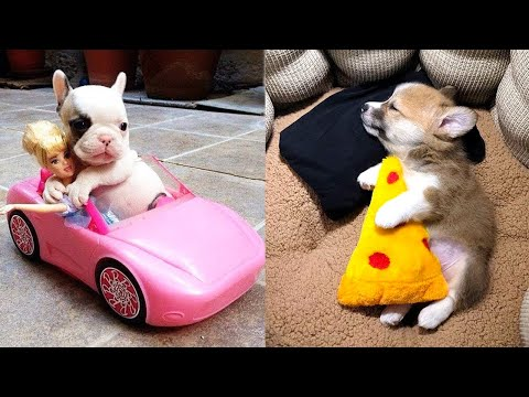 Baby Dogs – Cute and Funny Dog Videos Compilation #12 | Aww Animals