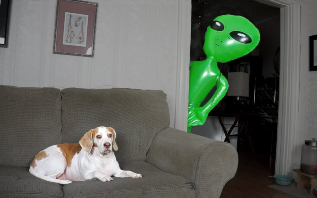 Dog Pranked with Alien: Funny Dog Maymo