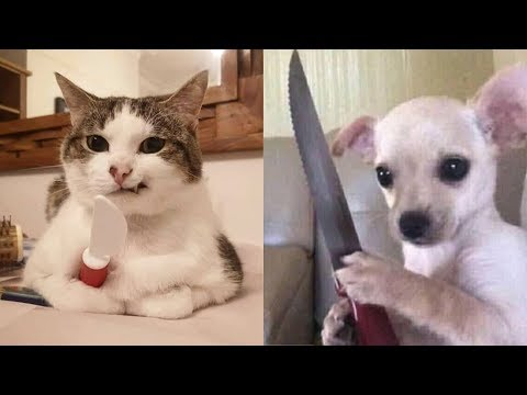 Dogs 🐶 And Cats 😻 Funny Animals Compilation – Pets Paws Video 2020