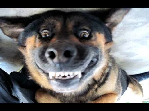Funny Dogs Barking – A Funny Dog Barking Videos Compilation 2015