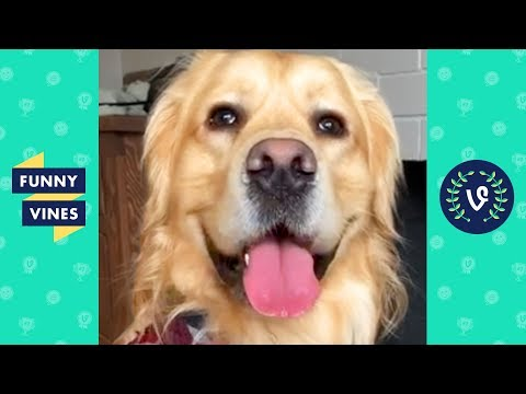 TRY NOT TO LAUGH – Funny Animals & Pets of the Week!