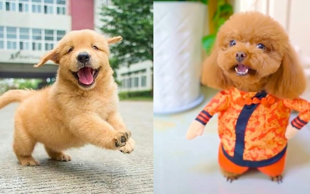 Baby Dogs – Cute and Funny Dog Videos Compilation #16 | Aww Animals
