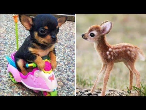 Baby Animals 🔴 Funny Cats and Dogs Videos Compilation (2020) Perros y Gatos Recopilación #1