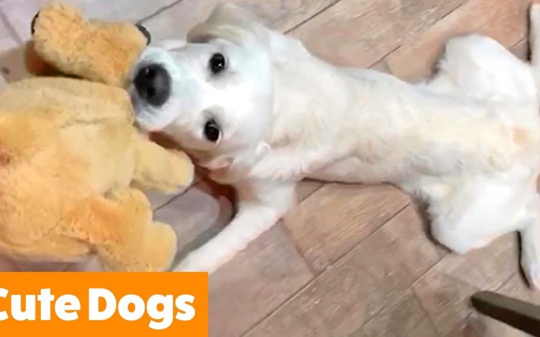 Adorable Dog Bloopers | Funny Pet Videos