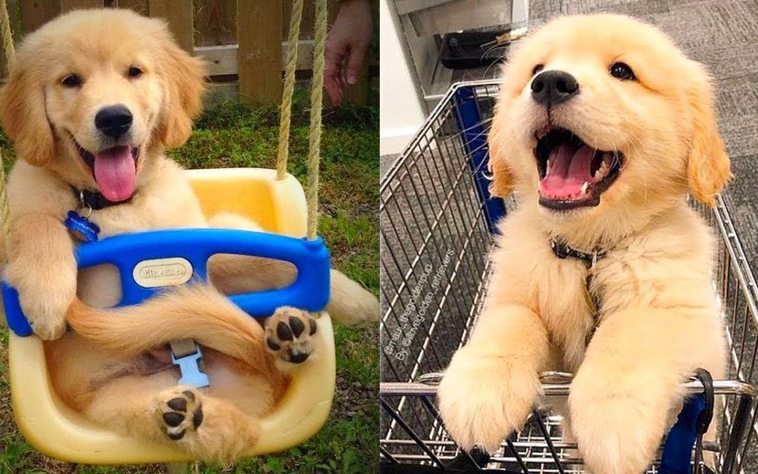 Baby Dogs – Cute and Funny Dog Videos Compilation #20 | Aww Animals