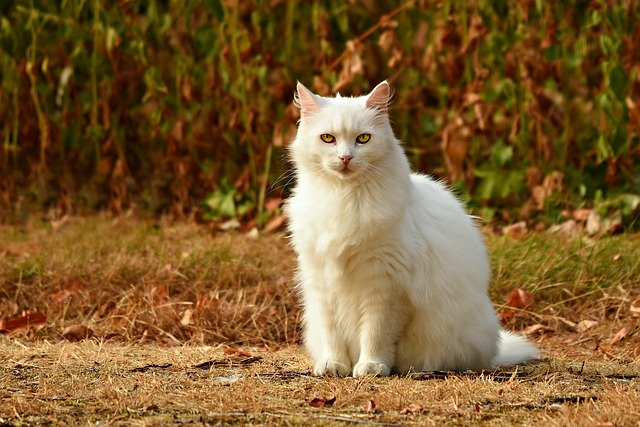 Caring For Cats, A Beginner's Guide To Help You Out