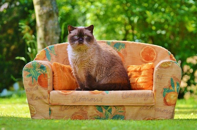 Some Sound Cat Care Tips For Owners Old And New.