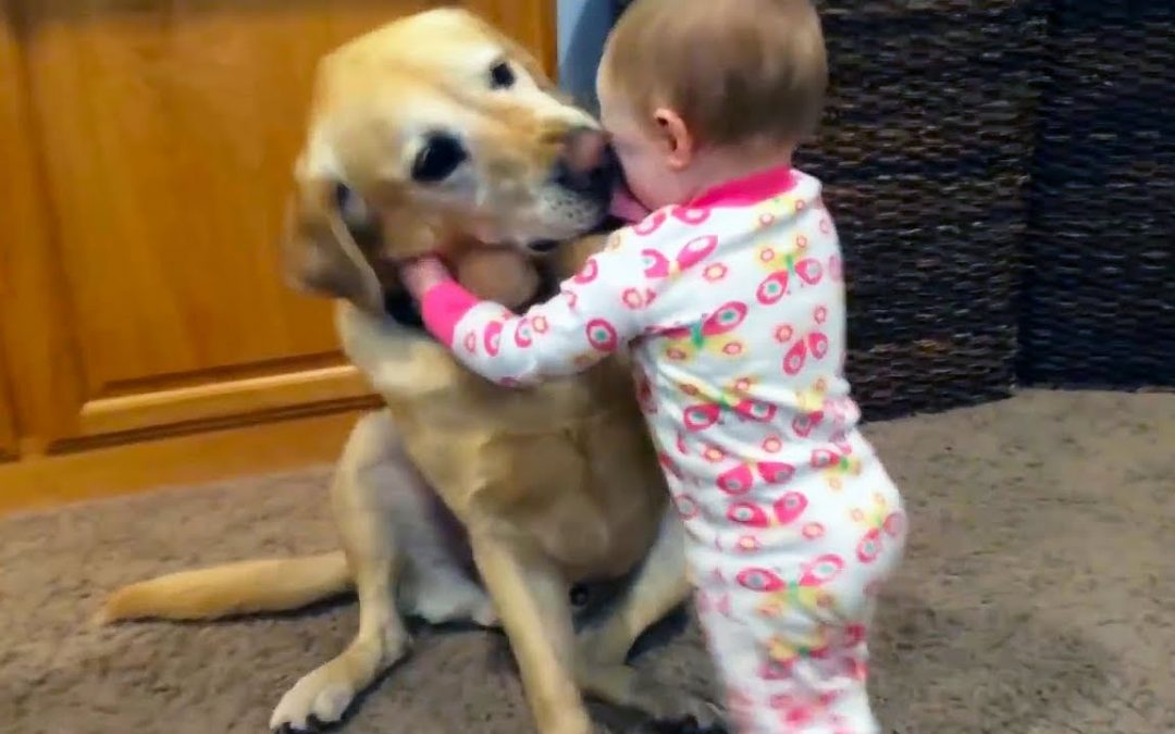 Adorable Babies Playing With Dogs and Cats – Funny Babies Compilation 2018