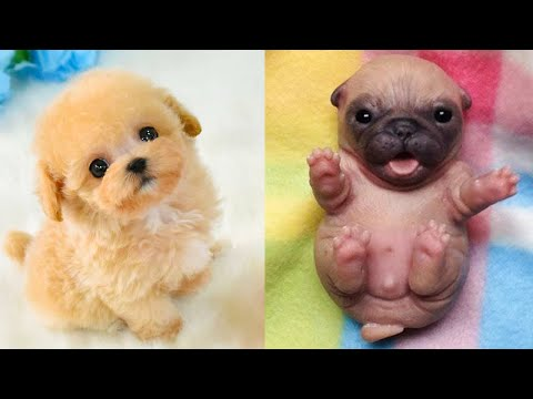 Baby Dogs – Cute and Funny Dog Videos Compilation #24 | Aww Animals