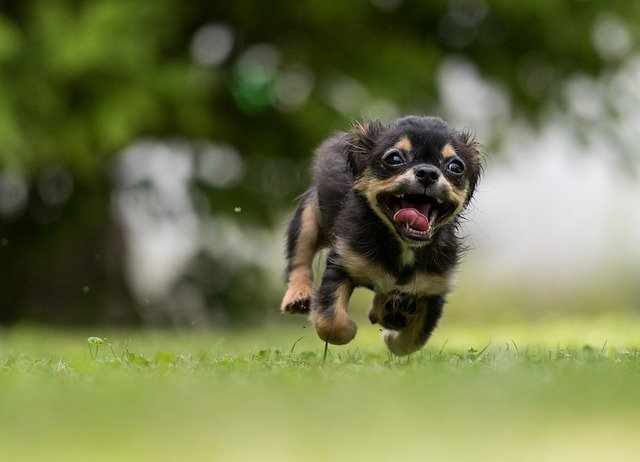 Amazing Tips That Make Training Your Dog Easier