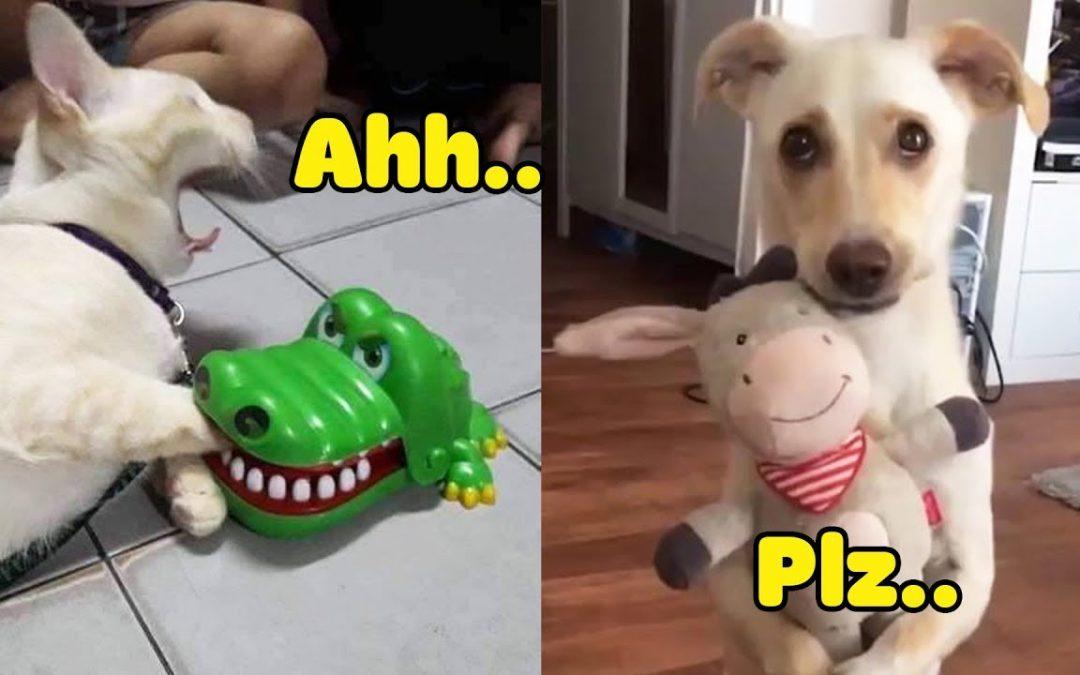 Dog And Cat Reaction To Toy – Funniest Dog & Cat Toy Reaction Compilation