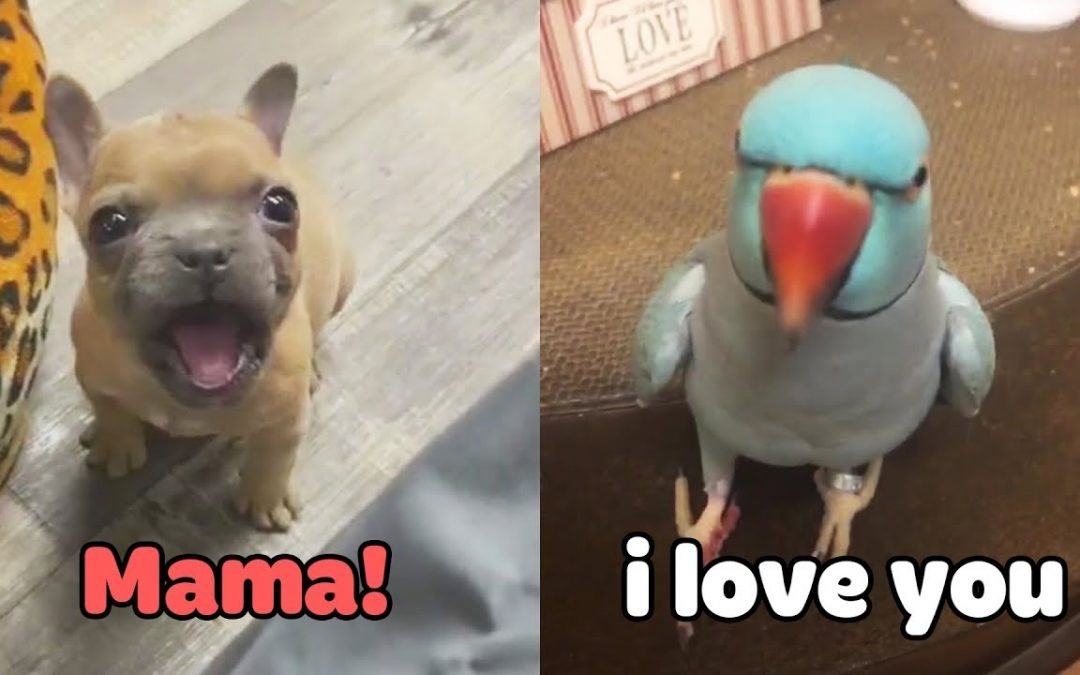 "Little Dogs Said ""Mama"" – Funny Parrots Speaking English 