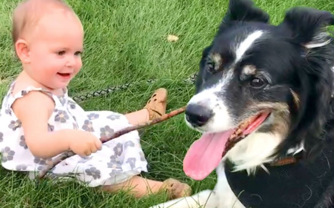 The Best Cute and Funny Dog Videos This Week! 🐶